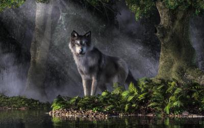 LEGENDY CAMINO: Wilk, który ocalił pielgrzyma